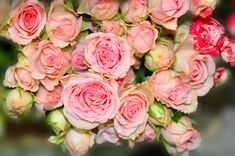 Roses Bouquets Closeup Flower-bud Pink color Flowers