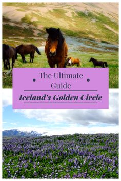 Discover the ultimate guide to Iceland's Golden Circle! Explore self-drive vs. tour options and learn about the essential stops on the Golden Circle.