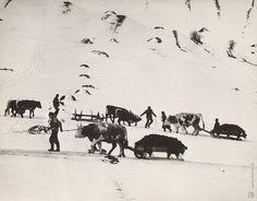 Martin Martinček: Vozenie hnoja:1957 - 1964 How To Make Light, Old Photos, Countryside, Folk Art, Moose Art, Nostalgia, Black And White, World, Winter
