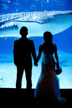 Georgia Aquarium wedding shot. Harwell Photography. Not gonna lie, I would absolutely love to get married or have my reception at the Georgia Aquarium, or even just get proposed to there (when not a bunch of people are there)