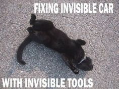 33 Best Invisible Cats Images In 2011 Funny Animals