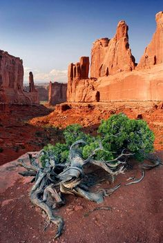 Park Ave Photograph - Park Ave Arches National Park by Dave Mills Arches Nationalpark, Yellowstone Nationalpark, Yellowstone Park, Great Places, Places To See, Beautiful Places, All Nature, Amazing Nature, Photo Usa