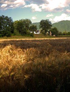 #VallediComino #WheatField