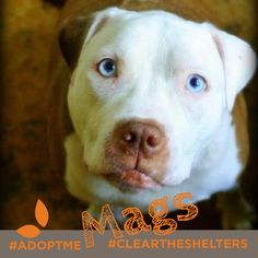 """This particular cutie is named Mags, she's a """"Happy Go Lucky"""" 3 year old with beautiful blue eyes. Unfortunately she has some pretty severe allergies so she needs special care. Can you sympathize? Maybe you're the right forever home for her! For more information about her needs and to look into adoption check in with our friends at @AnimalArk!"""