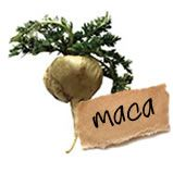 Maca, wetenschap bekend als lepidium meyenii of specifieker peruvianum, is een plant uit de hoogtes van de Andes van Peru en Bolivia.  Er zijn veel namen voor deze plan zoals maino, maca-mace, ayak willku, en ayak chichira. De plant wordt verbouwd voor de wortel die uit dezelfde familie stamt als de knol en radijs.