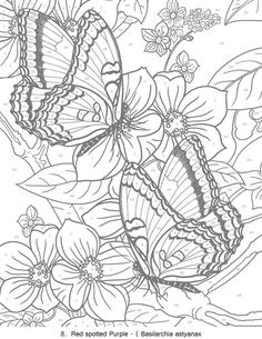 Creative Haven Butterflies Color by Number Coloring Book - Butterfly Papillon Mariposas Vlinders Wings Graceful Amazing Coloring pages colouring adult detailed advanced printable Kleuren voor volwassenen coloriage pour adulte anti-stress kleurplaat voor volwassenen Line Art Black and White