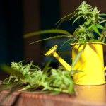 medical-marijuana-cannabis-tinctures