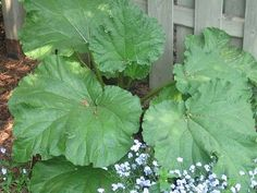 insecticide naturel pour le jardin, fonctionne très bien sur les pucerons