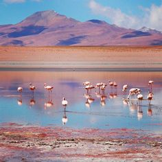 Did you know Bolivia is home to thousands of Pink Flamingos? The lunar landscapes of the highlands were full of surprises and photo ops #bolivia #highlands #flamingos