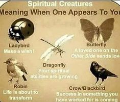 What does it mean if a damselfly lands on you and won't leave? Wiccan Spell Book, Wiccan Witch, Magick Spells, Wicca Witchcraft, Creature Meaning, Witchcraft For Beginners, Animal Spirit Guides, Eclectic Witch, Herbal Magic