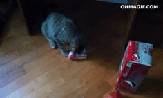 This cat who thought a can of soda would be refreshing but was obviously very wrong. | 28 Cats Having A Way Worse Day Than You
