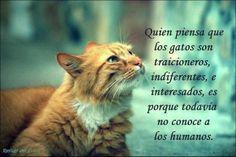 Quien no ha sufrido un desengaño, de un compañero, de un colega, de un amigo. Pero hay esperanza, también hay animales fieles en el mundo.