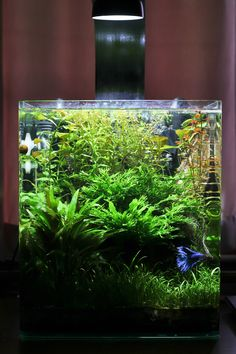 First Attempt - Planted Nano Tank - Page 6 - The Planted Tank Forum