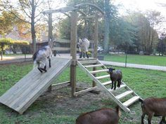 DIY: Build a Goat Tower Playground - Cause they need to be entertained too happy goats make te best milk! Keeping Goats, Raising Goats, Goat Playground, Playground Ideas, Playground Slide, Goat Shelter, Animal Shelter, Goat Pen, Goat Care