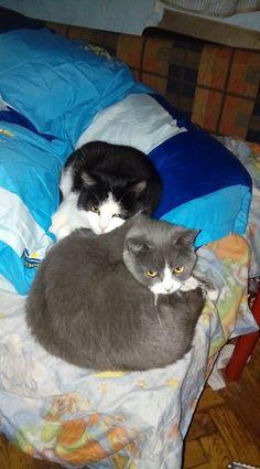 Name: Domino und Chili (sie sind kastriert!)