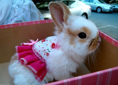cute bunny, be even cuter if the doll dress was off it