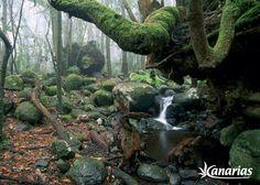 Bosque de laurisilva, Parque nacional de Garajonay, La Gomera