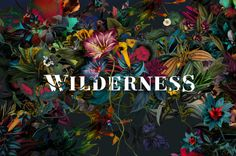 WILDERNESS FESTIVAL BRANDING By Paul Mulvey