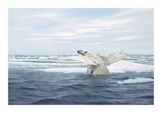 """Thaw"" Art Print by Josh Keyes Antler Gallery has a new art print from Josh Keyes in their shop. ""Thaw"" is a 14″ x 20″ giclee, has an edition of 175, and costs $250. Visit A... http://drwong.live/weird/qusykiap7q4/"
