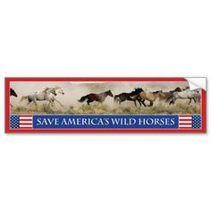 Save America's Wild Horses Bumper Sticker 1 - proceeds from the sale of this item goes to help Carol Walker's efforts of keeping our wild horses free to roam on our public lands.