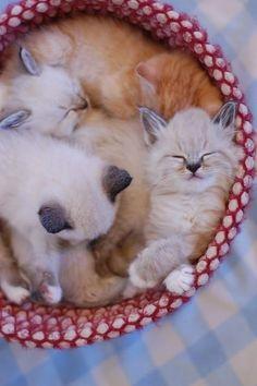 A Basket of kittens!
