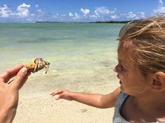 Big hermit crab on this lost awesome beach: little Adèle is impressed by the size ! Bernard l'hermite géant: Adèle est impressionnée...#paradise #boat #instagram #picoftheday #instasurf #mauritius #kids #travelgram #travellife #traveling #surfing #babygirl #instagood #lagoon #beachlife #beachkids #paradise #kite #surfer #instagood #beachbaby #beach #photography #iphone6 #photooftheday #photographer #slowlife #rodrigues #nofilter #sailing #hermitcrab #travel #tourism #travelgram #popular…