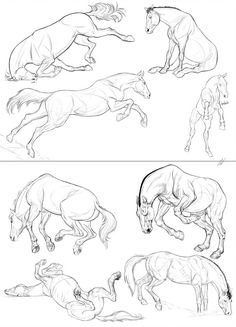 Mystery Project - Batch 8 by ColossalBeltloop Horse Drawings, Cool Art Drawings, Art Drawings Sketches, Animal Drawings, Dessin My Little Pony, Arte Equina, Horse Anatomy, Animal Anatomy, Horse Sketch
