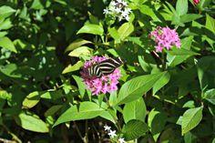 Naples, Florida Botanical Garden