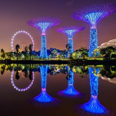 Grand view of the Singapore Flyer and the Supertree Grove at the Gardens By The Bay in Singapore captured by @christinatan.