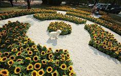 Beatriz Milhazes realiza seu primeiro jardim em Festivalno Ibirapuera, em São Paulo