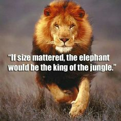 """""""If size mattered, the elephant would be the king of the jungle. Motivational Quotes For Men, Great Quotes, Inspirational Quotes, Positive Quotes, Uplifting Quotes, Strong Quotes, Citation Lion, Islamic Quotes, Lion Quotes"""