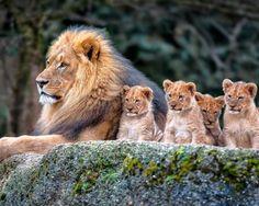 """angel-kiyoss: """" That's my family photo! """""""