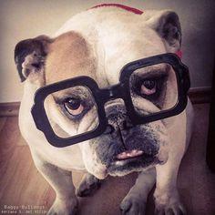 ♥ BaggyBulldogs ♥