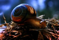 Snail  by EMERALD WAKE © on 500px