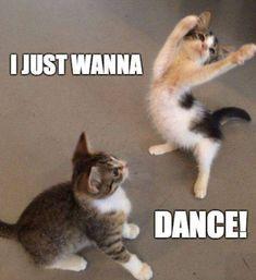 Tiffany hwang i just wanna dance funny cats funny animal memes cat memes Funny Animal Jokes, Funny Dog Memes, Cute Memes, Cute Funny Animals, Funny Dogs, Cute Cats, Funny Animal Videos, Memes Humor, Funny Quotes