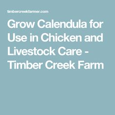 Grow Calendula for Use in Chicken and Livestock Care - Timber Creek Farm