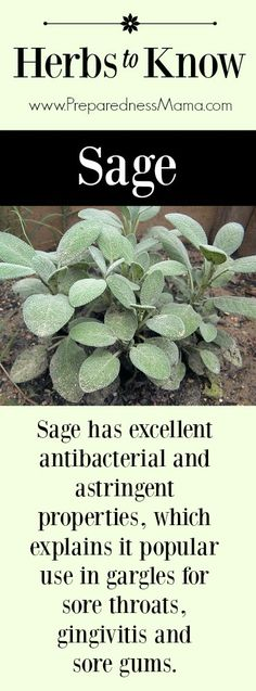 Herbs to Know: Sage. It's antibacterial and astringent properties, which explains it popular use in gargles for sore throats, gingivitis and sore gums | PreparednessMama