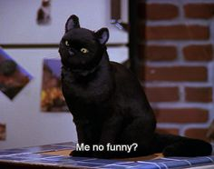 27 Times Salem The Cat Understood You---- That's literally me when people don't laugh at my jokes, and sometimes get mad at them...