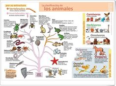 La clasificación de los animales (Infografía de Ciencias Naturales) Diy Phone Case Design, Spanish Teaching Resources, Science, Green Life, Interactive Notebooks, Funny Animal Pictures, Projects For Kids, Biology, Homeschool