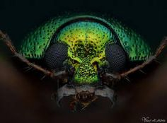 I am unfolding before you stunning extreme macro photography by AlHabshi. Photography is an art that requires passion to capture the unapproachable Long Legged Fly, Macro Photography, Amazing Photography, Insect Eyes, Leaf Beetle, Beautiful Bugs, Wild Creatures, Chenille, Beautiful Creatures
