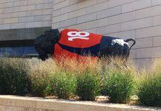 Even Denver's buffalo are excited about football season! Go Broncos!!