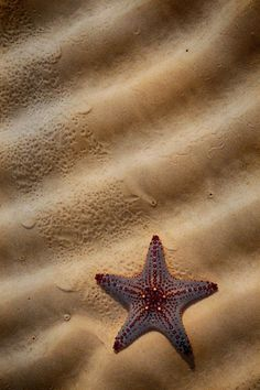 PEOPLE-PLACES-THINGS-ETC — orchidaorchid:   Sea Star by Garry Schlatter