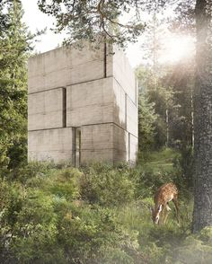 marte marte architects sets tiny monolithic house in forest clearing