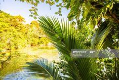 Caribbean Sea Photography #Ad, , #Aff, #Caribbean, #Sea, #Photography Sea Photography, Business Powerpoint Presentation, Caribbean Sea, Plant Leaves, Plants, Flora, Plant