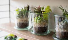 【欠品中】WECK 多肉セット(M) | greeniche Weck Jars, Mason Jars, Plant Wall, Plant Decor, Bottles And Jars, Glass Jars, Mini Cactus, Crafty Craft, Next At Home