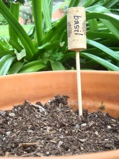 Love the wine cork markers! Just finshed my wine cork plant markers for my indoor herb garden! Good idea and easy! Wine corks, bamboo skewers and a pretty felt tip pen to write with! Garden Deco, Herb Garden, Garden Stakes, Garden Water, Easy Garden, Garden Club, Green Garden, Garden Plant Markers, Garden Plants
