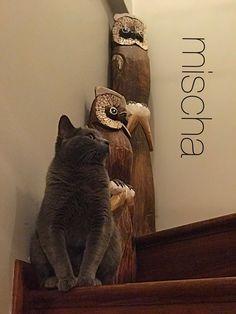 Baykuş sandım kendimi😺 mischa