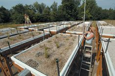 View of the extensive green roof trial plantings at Oregon State University. photograph by lynn ketchum, OSU eeSC