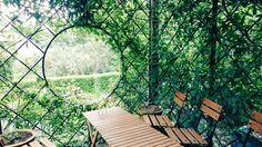 Outdoor Furniture, Outdoor Decor, Tulips, Twitter, Home Decor, Decoration Home, Room Decor, Home Interior Design, Tulip