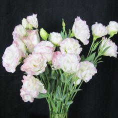 Lisianthus - bouquet and hair